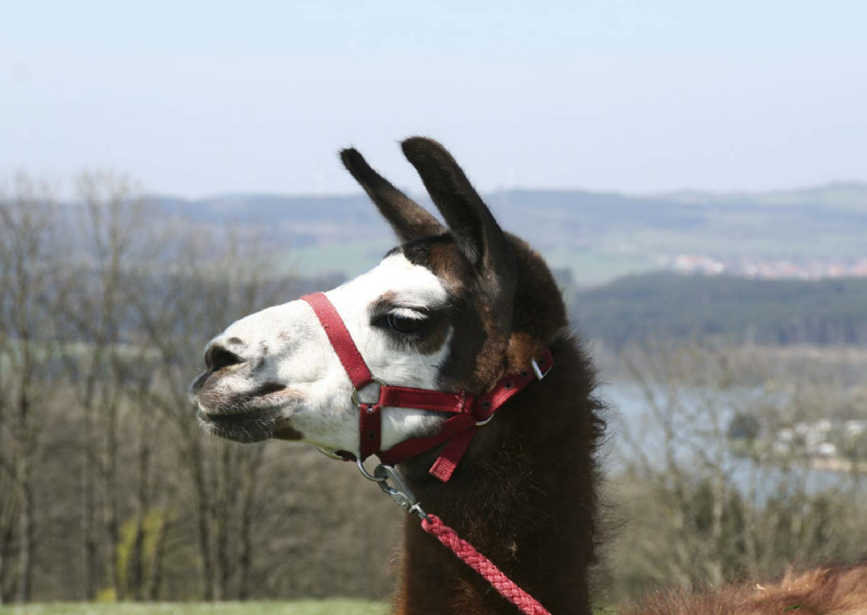 Wanderführer Lama